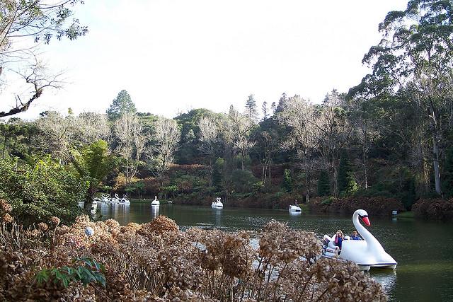 lago negro_gramado