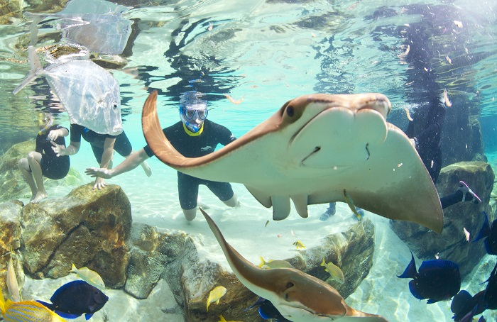 discovery cove orlando arraias