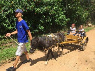 fazenda angolana