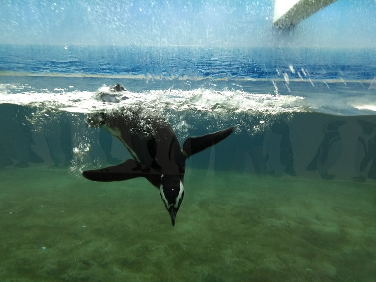 parque sabina pinguins
