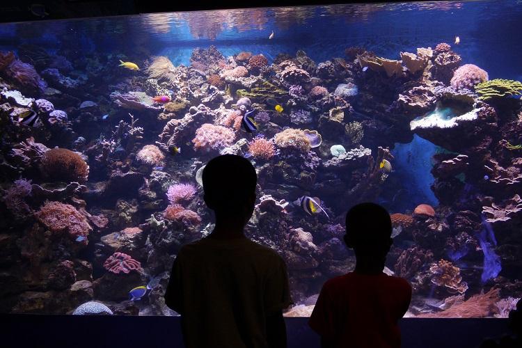 Nova York com crianças – aquario – Kimberly Coleman