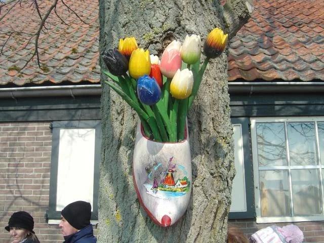 Socos e tulipas
