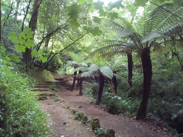 Trilhos na Serra do Buçaco.