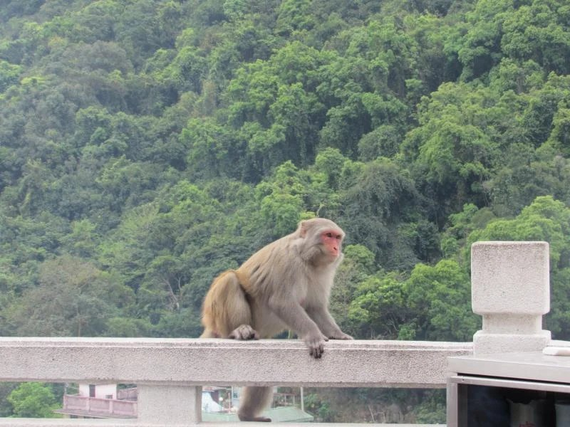 monkey-at-ten-thousand-buddhas-monastery-hong-kong