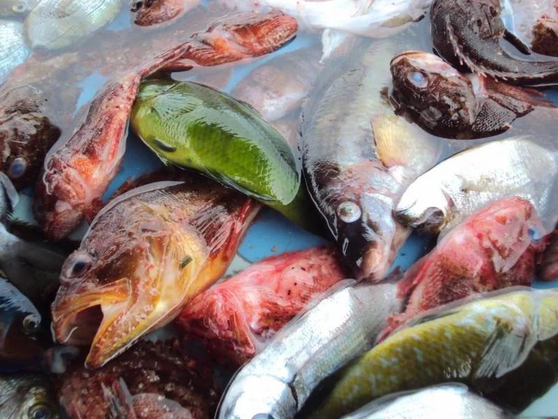 peixes-marselha