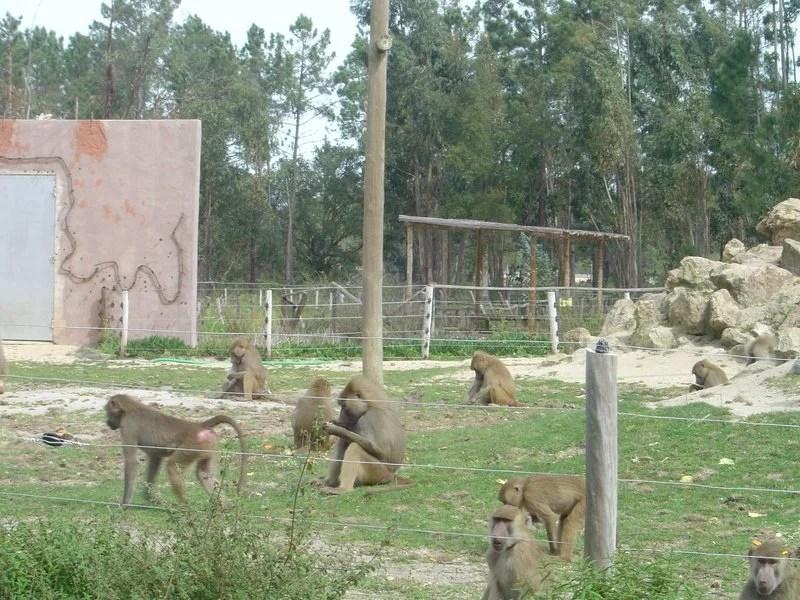 A Ilha dos Grandes Primatas