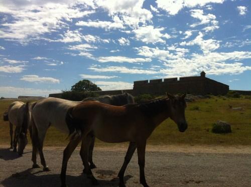 Forte de Santa Teresa.