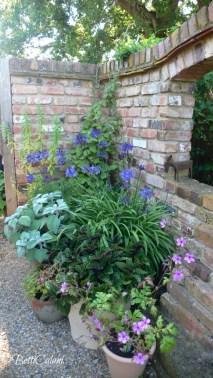 Agapanthus, hosta, geranium