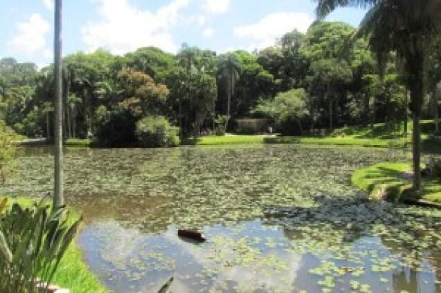 Lago das Ninfeias do Jardim Botânico de São Paulo Foto: Patrícia Ribeiro/ Passeios Baratos em SP