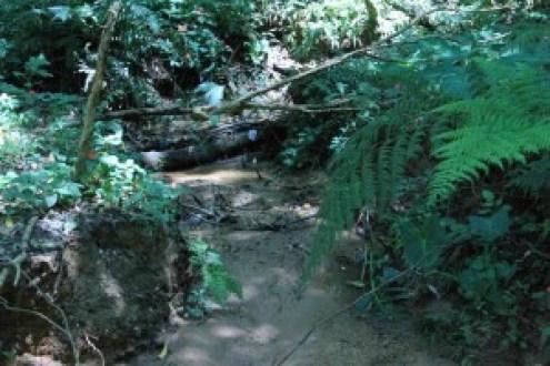 Parque Shangrilá, no Grajáu, oferece trilhas e horta. Foto: Divulgação