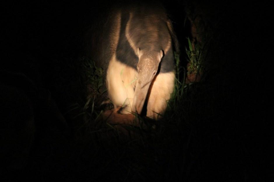 Visita noturna - Zoológico. Foto: Carlos Nader