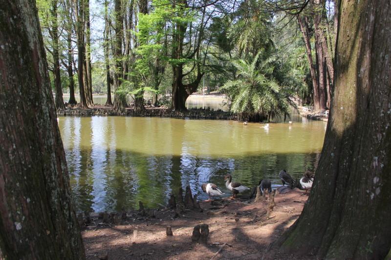 Horto Florestal fica na zona norte. Foto: Secretaria do Meio Ambiente