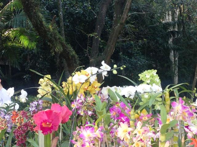 Primavera no parque Foto: Divulgação