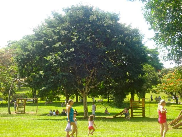 Ceret Foto: www.areasverdesdacidade..com.br