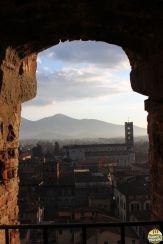 Lucca - torre Guinigi_14