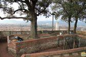 Lucca - torre Guinigi_46