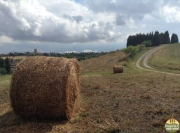 Montalcino_49