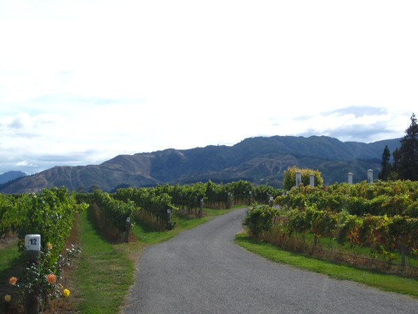 Marlborough's vineyards, New Zealand