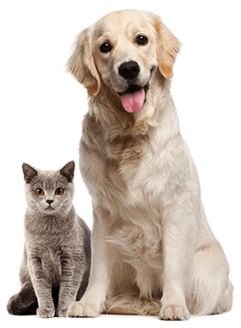 pets-about-free-img.png