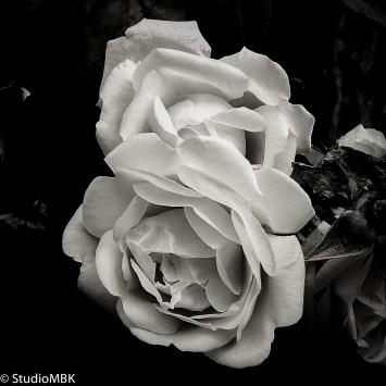 20110704-IMG_0523