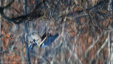 Great Blue Heron Pair Reflected in the Pond