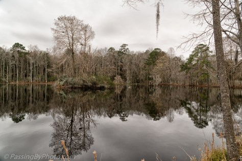 Pond Reflections on Grey Day