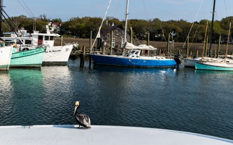 Pelican Resting on Docked Boat