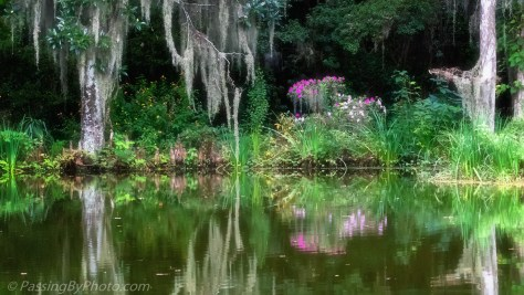 Pond at Magnolia Plantation and Gardens