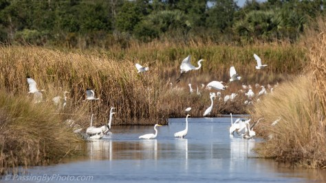 Wading Bird Frenzy