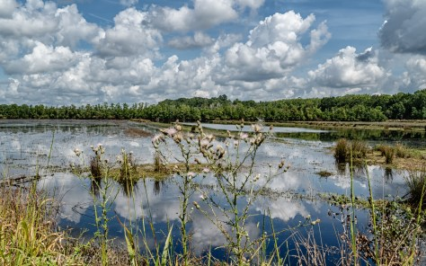 Rice Field Ponds and Clouds
