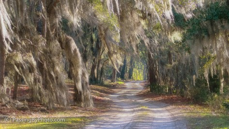 Squiggly Road Into the Woods