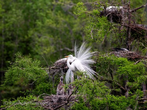Tree of Nesting Birds