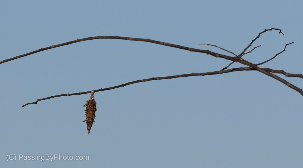 Twig against the sky, a dangling unknown