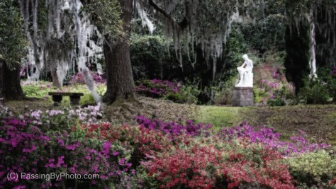 Garden at Middleton Place