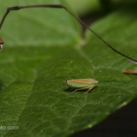 Daddy Long Legs and Friend