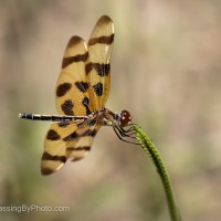 Halloween Pennant, In A Breeze