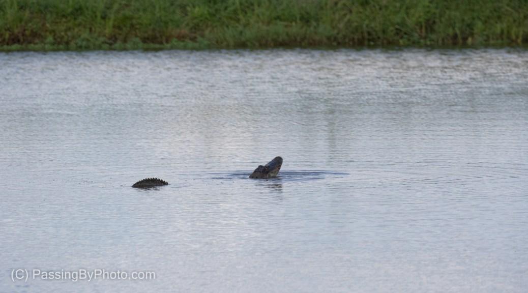 Alligator Profiling