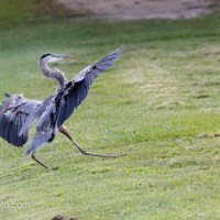 GBH Perfect Landing, Or Not