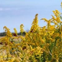Silent Sunday: Gulf Fritillary Butterflies