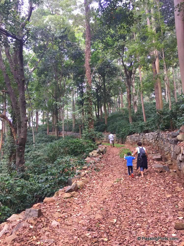 Trek Yercaud