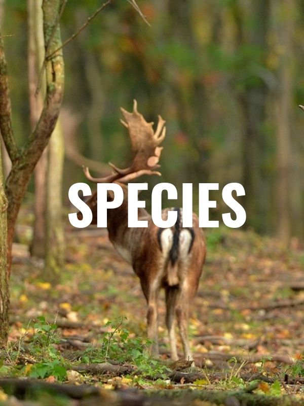 species section for hunting trips