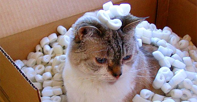 cat-styrofoam