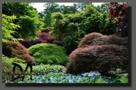 Japanese garden - Arcen