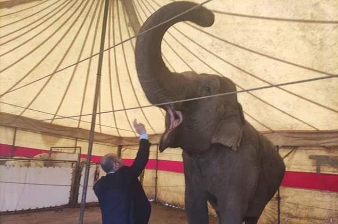 Circo Togni e Rony Roller
