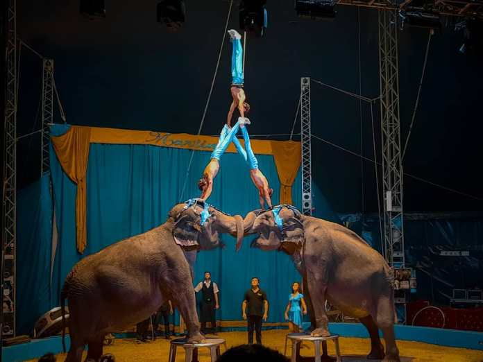 Le foto del Circo Rinaldo Orfei a Catanzaro