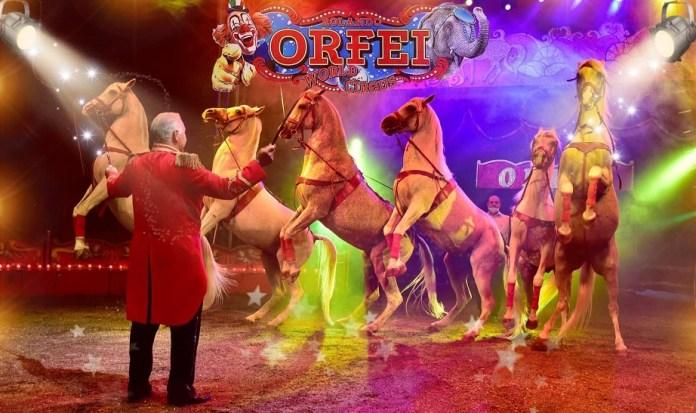 Il Circo Rolando Orfei debutta a Bergamo. Video