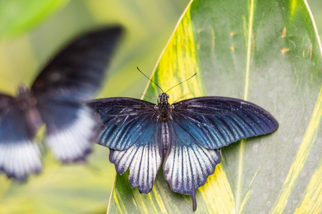 Papillons-en-liberte-a-montreal-6