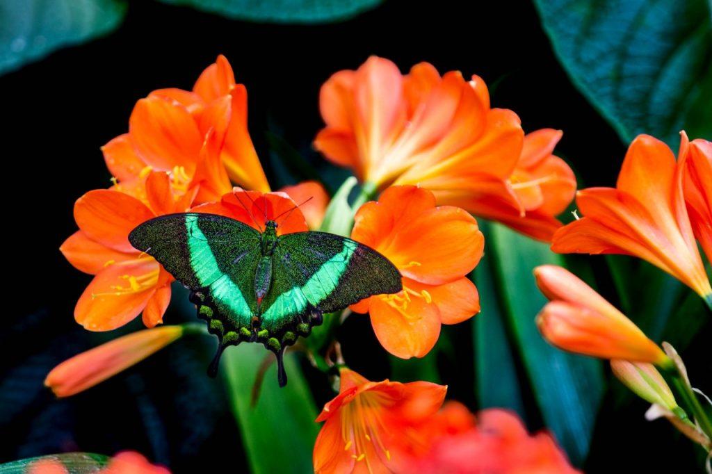 Jardin Botanique-yannick-legare