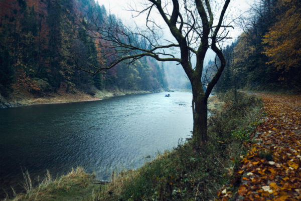 Banks of a river in the Pieniny National Park