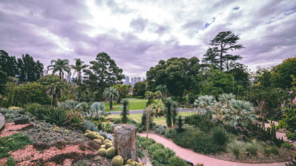 Colorful plants of the Royal Botanic Gardens, Melbourne